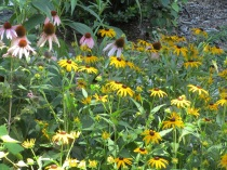 Garden in July