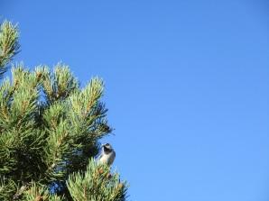 Grand Canyon bird